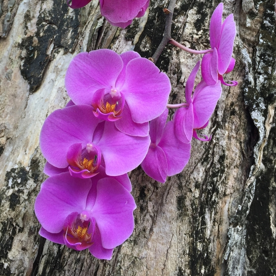 tree mounted orchid