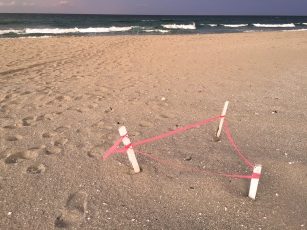 delray beach turtle nest