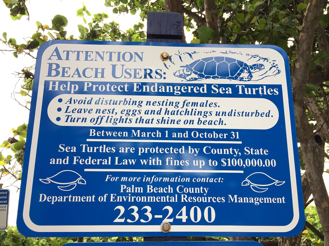 Help Protect Endangered Sea Turtles