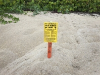sea turtle nest, do not disturb