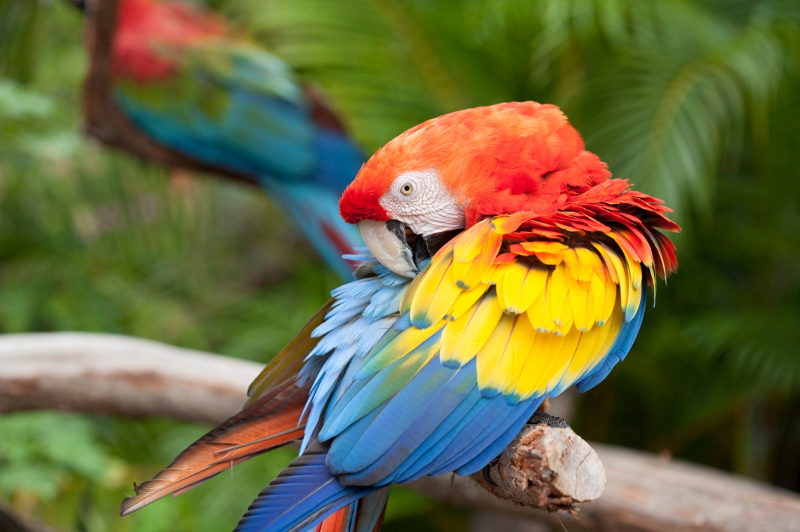Butterfly World, macaw