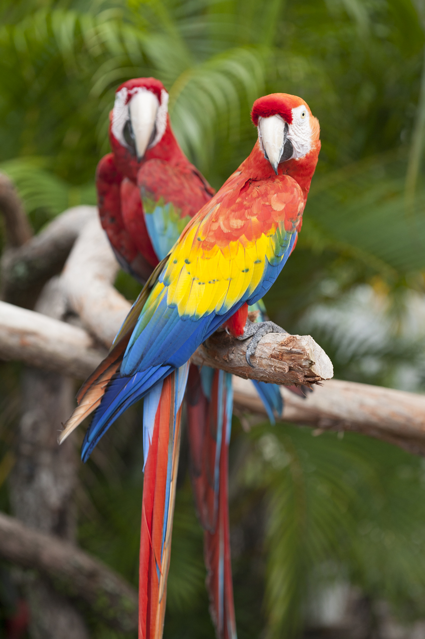 Butterfly World, Macaws